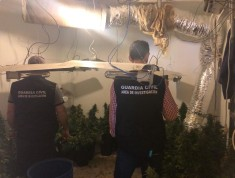 La Guardia Civil interviene 570 plantas de marihuana.