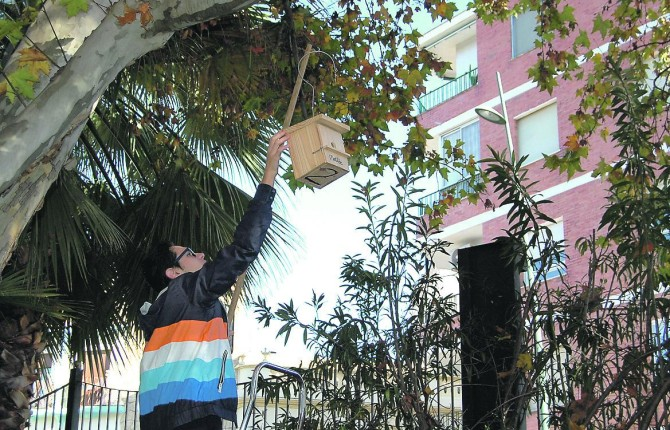 ACTIVIDAD. Una integrante de Ameco ubica una de las cajas-nido en el Parque de las Vistillas.