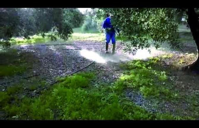 CURACIÓN. Un operario irriga herbicida en un campo de olivares.